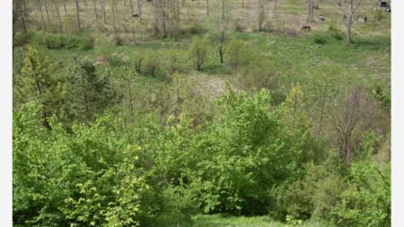 местността край Алботинския манастир