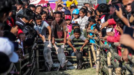 Фестивал на прасетата в провинция Северна Суматра.