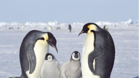 Пингвините са най-голямата атракция на Антарктида