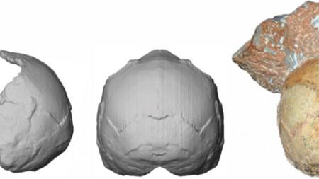 Фрагмент от черепа, известен като Апидима 1 (вдясно), видян при реконструкция отзад (в средата) и отстрани (вляво).