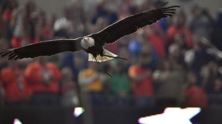 Белоглавият орел  Кларк трябвало да прелети над стадиона по време на националния химн, решил да се приземи в публиката.