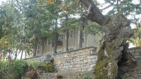 Петвековният дъб в Ново село