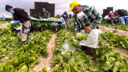 Сезонни работници от Мароко прибират реколта в Испания, април 2020 г.