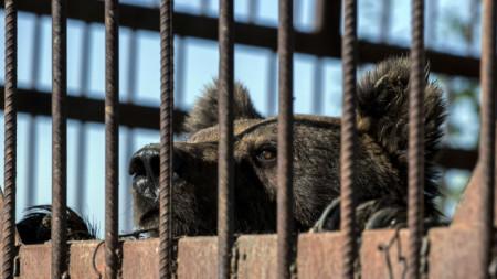 През 2016 г. в Сърбия конфискуваха последните три циркови мечки