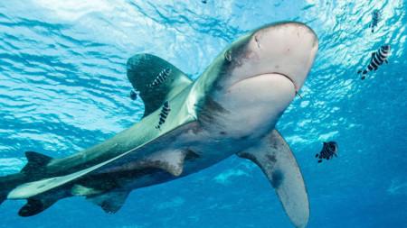Атаката била извършена от океанска дългокрила акула