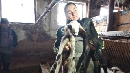 Ана Петрова от Болярово с две от новородените агнета в стадото ѝ. Тя обжалва заповедта за заличаване на нейната овцеферма като животновъден обект.