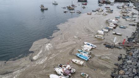 """""""Морски сополи"""" в Мраморно море по крайбрежието на Истанбул."""