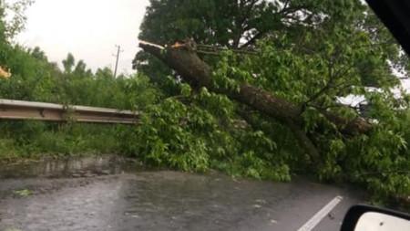 Паднало дърво край с. Езеро