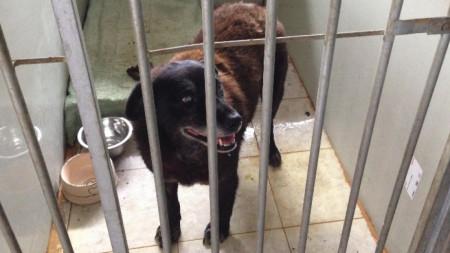 Това куче е било блъснато от кола преди дни и в момента е на лечение в приюта.