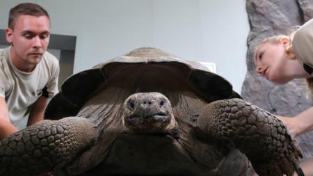 Галапагоските костенурки са емблемата на острови