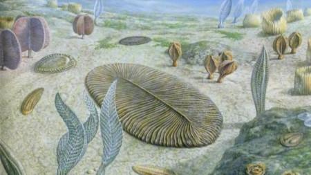 Рисунка на предполагаемия вид на Дикенсония.