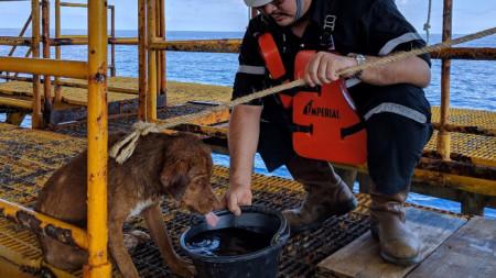 """Работниците на платформата край бреговете на Тайланд кръстили кучето Бонрод, което на местния език значело """"оцелял"""" или """"спасен""""."""