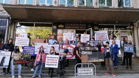 Протест с искане за закриване на единствената ферма за норки у нас, София,12 май 2021 г.