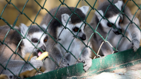 Столична зоологическа градина