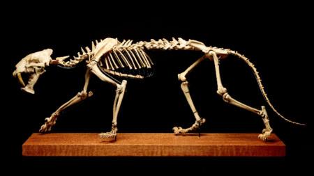 Скелетът е дълъг около 120 сантиметра.