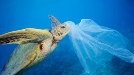 www.greenpeace.org