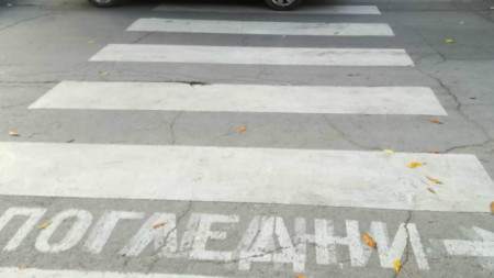 Зебрата на ул.