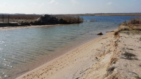 Заради драстичен спад - с около метър, на водното ниво на Шабленското езеро голяма част от плитчините на влажните зони са пресушени.