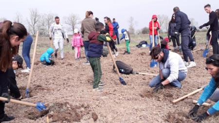 """Досега в рамките на кампанията """"Новата гора на София"""" са засети 60 хиляди фиданки."""