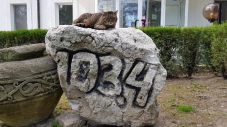 Котката на Радио Варна блажено се наслаждава на есента