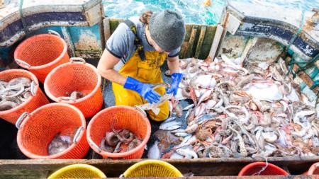 Сортиране на улова на борда на риболовен кораб в Ла Манш