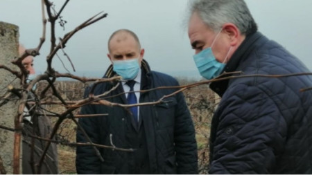 President Rumen Radev and Pleven mayor take part in the ritual of pruning the vines of the Enology Institute in Pleven