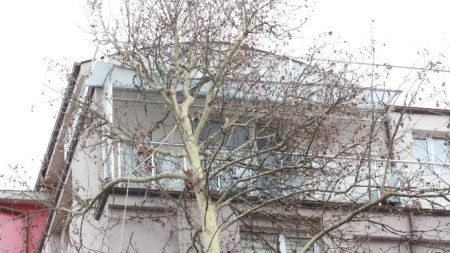 Дърво се стовари върху жилищен блок в Казанлък