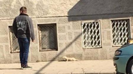 Норки се забелязват вече и в Стара Загора.