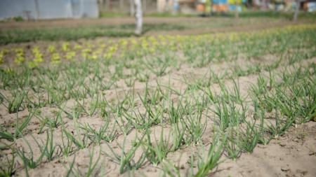 Търсенето на биопродукти расте. Все повече хора се информират за чистата и здравословна храна.