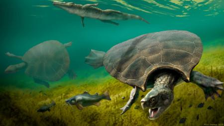 Гигантската костенурка обитавала северни район на Южна Америка.