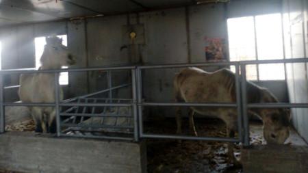 Общинският приют за безстопанствени животни в Дупница