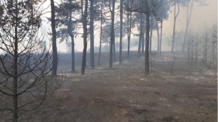 Пожар в Хасковской области, 9 августа 2020 г.
