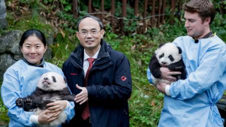 Двете панди бяха представени официално преди 2 дни, на 14 ноември