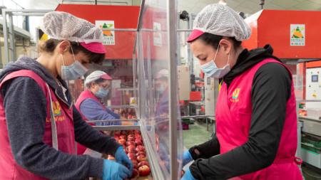 Работнички в испанско предприятие за разделени с пластмасови прегради
