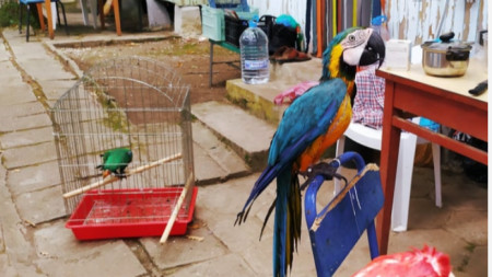 Папагалът Роко