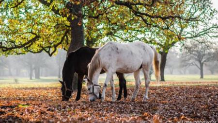 Есен в