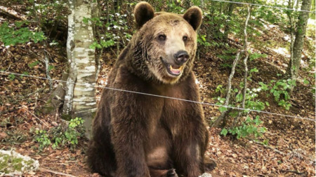 Фото: Facebook /Парк за танцуващи мечки/Dancing Bears Park