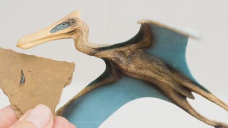 фосил от зъб, открит в Германия, и реконструкция на птерозавър