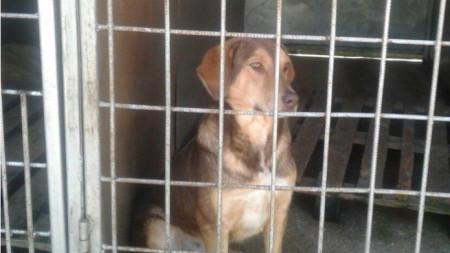 Повече от седмица продължи напрежението около приюта за кучета в Дупница, след като от неправителствени организации организираха протести и заплашиха да изградят и палатков лагер.