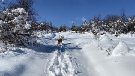 Уикендът идва, разходете кучето, идете в планината