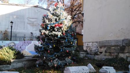 Елхата на лапидариума в Стария Пловдив