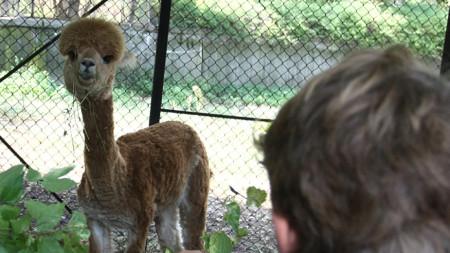 При спазване на всички противоепидемични мерки и най-вече спазването на дистанция със заповед на кмета на София Йорданка Фандъкова, Зоологическата градина отваря врати за посетители на 14 май.