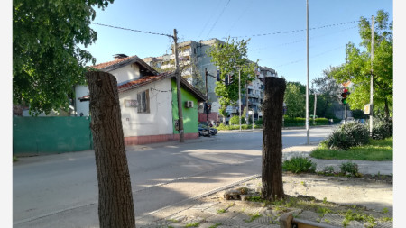 Отсечените дървета на ул