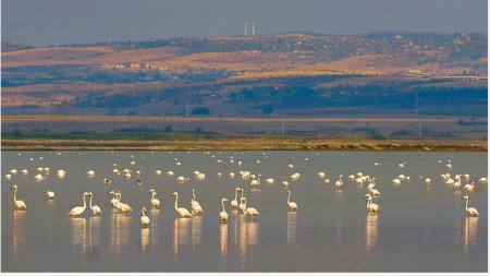 Снимка: Българска фондация Биоразнообразие