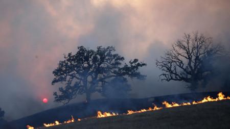 Пожар в Калифорния