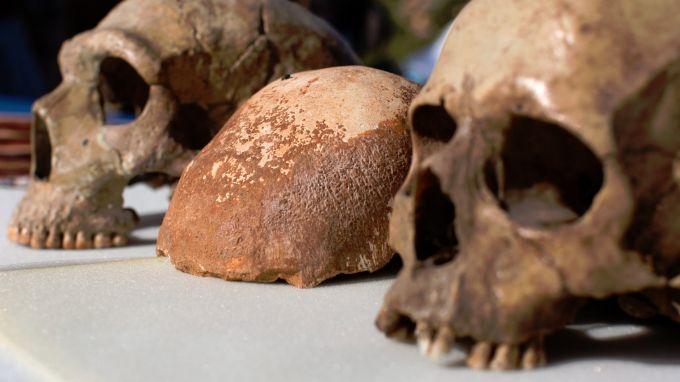 Учени: Човешката еволюция не е такава, каквато се представя