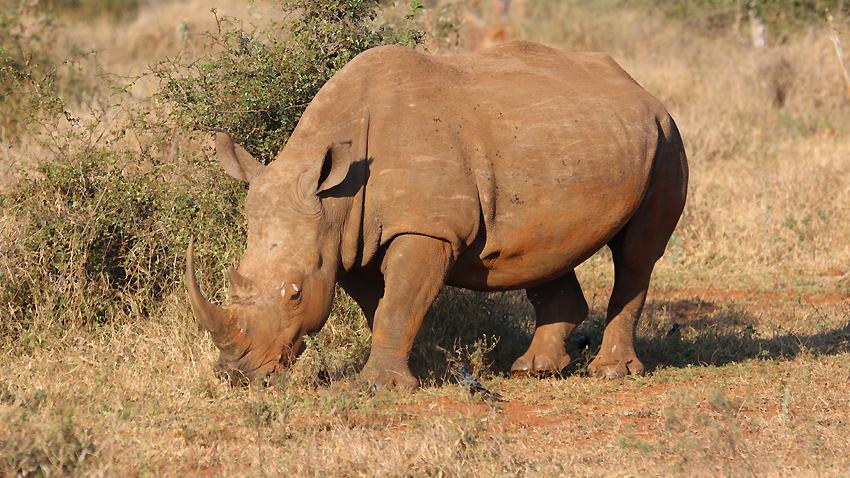 Столичният зоопарк отбелязва Международния ден на носорога с информационна кампания,