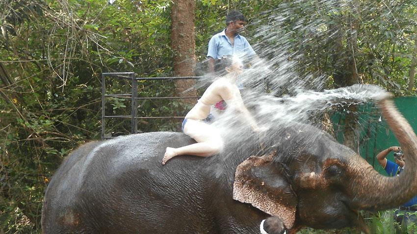 Слонско СПА в Гоа, Индия