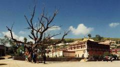 Свещеното дърво в тибетския манастир Кумбум.