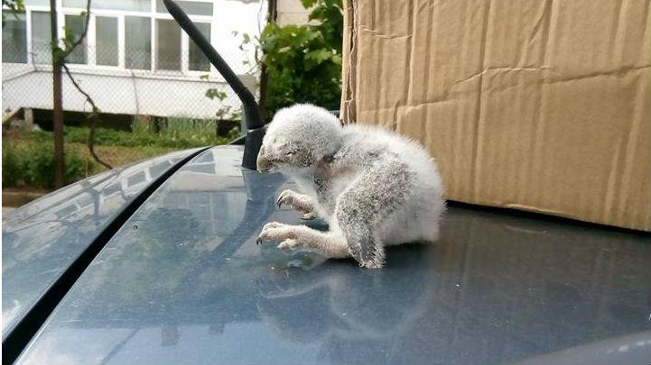 Как хора и институции се обединиха за спасяването на бебе сова? - слушайте в рубриката